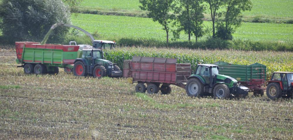 Kiszonka z kukurydzy w pigułce - Zielone Pola Osadkowskiego