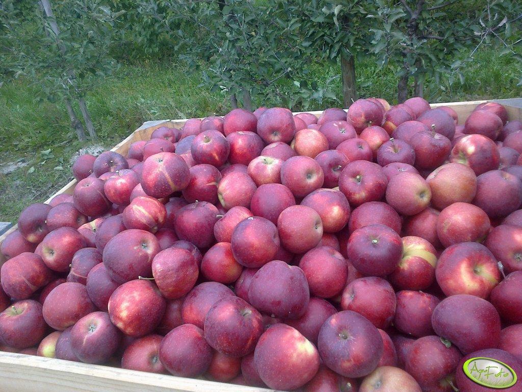 Jabłka tematem przewodnim międzynarodowego spotkania sadowników i przetwórców