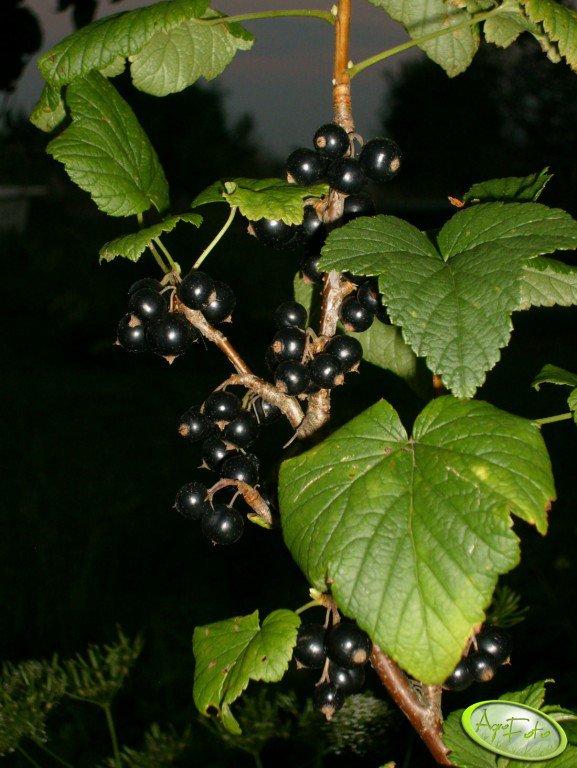 Co zrobi ministerstwo rolnictwa, by poprawić sytuację na rynku owoców miękkich?