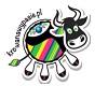 Krowa na wypasie poleca kukurydzę na kiszonkę firmy Syngenta