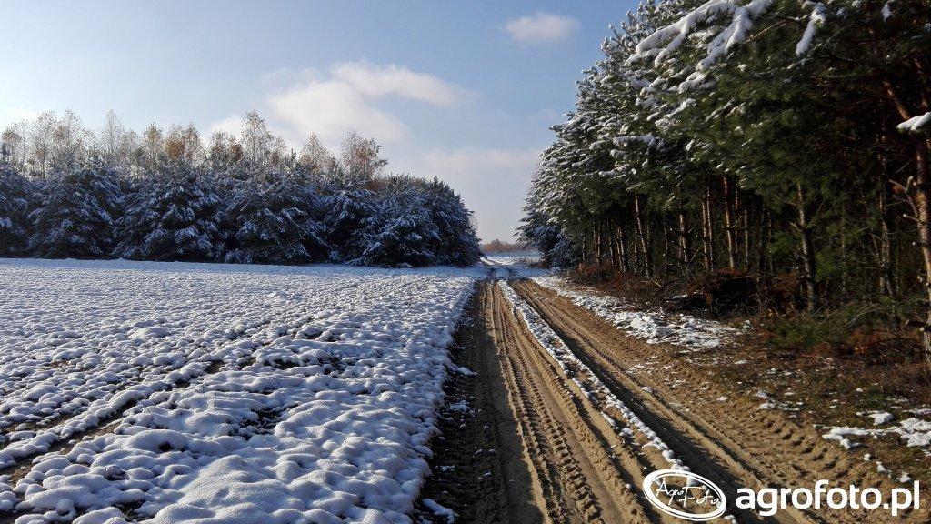 Ruszają Konferencje Zimowe Syngenta!