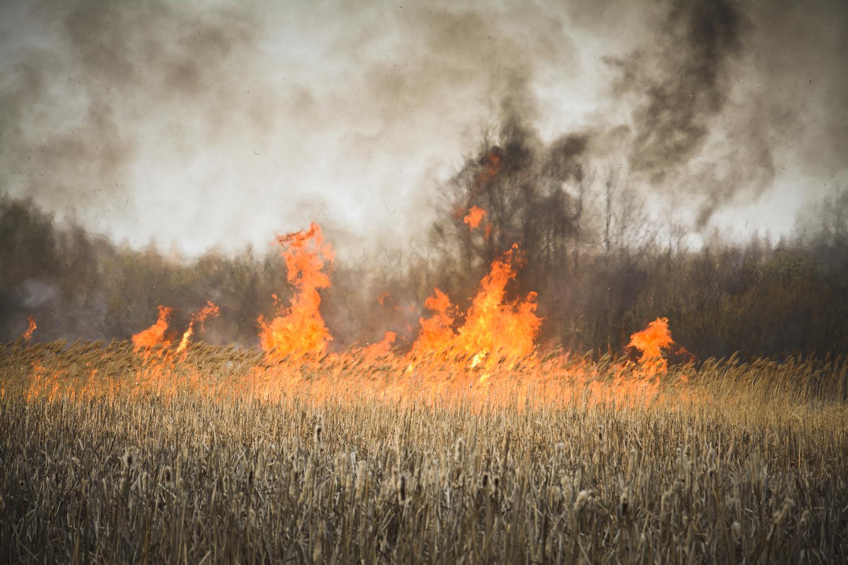 Trwa susza, płoną pola