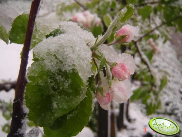 Przygotowanie drzew do zimy