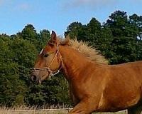 Drogie leczenie koni w Polsce