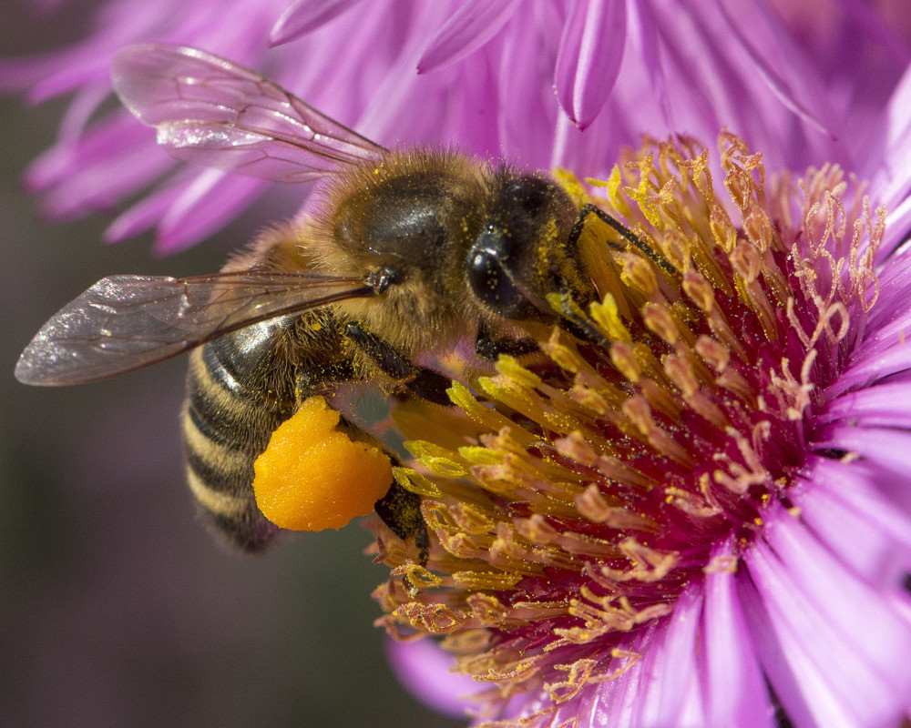 Głubczyce już wiedzą jak pomagać pszczołom