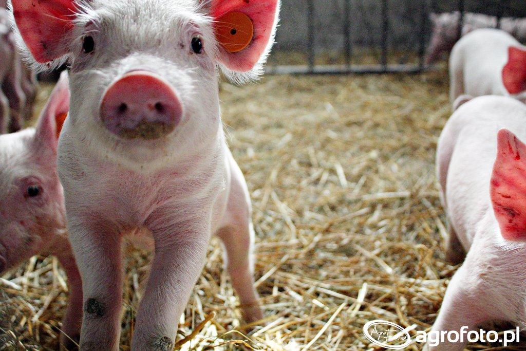 Nie będzie zwrotu kosztów bioasekuracji dla małych gospodarstw!