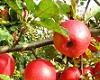 Dokarmianie sadów przed kwitnieniem – kiedy i jakie?