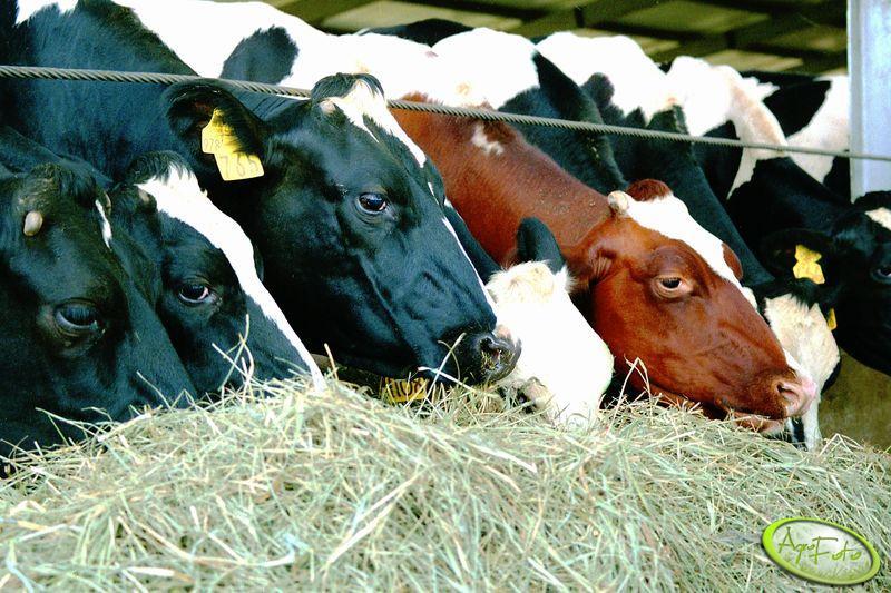 Ile wyniosą kary za nadprodukcję mleka za rok kwotowy 2014/2015?