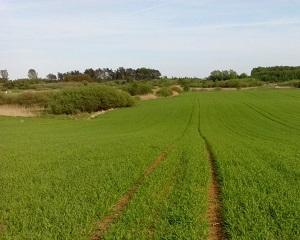 Wapnowanie to nie tylko regulacja odczynu gleby