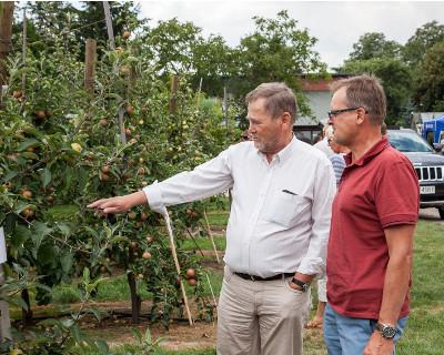 O jabłkach u Nowakowskich – merytorycznie i praktycznie