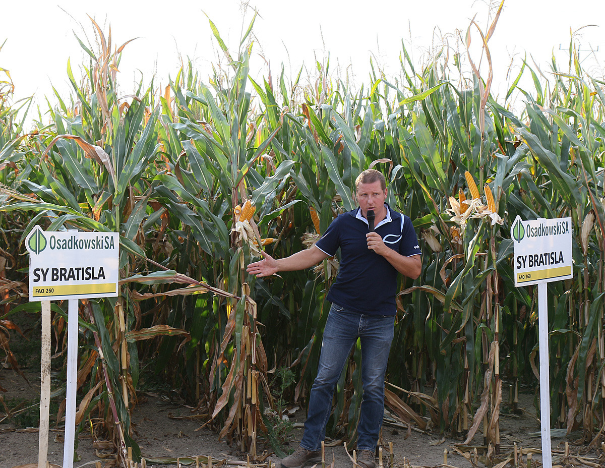 Osadkowski SA: Wieczorne manewry w kukurydzy
