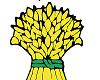 Rynek zbóż – stan obecny i perspektywy