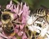 Syngenta tworzy siedliska z pożywieniem dla pszczół