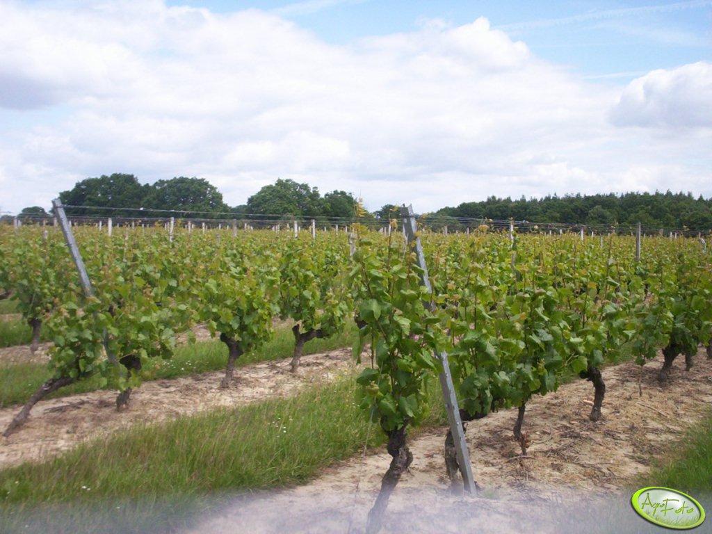 ARR przypomina winiarzom o złożeniu wniosków