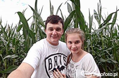 Szkodniki w kukurydzy