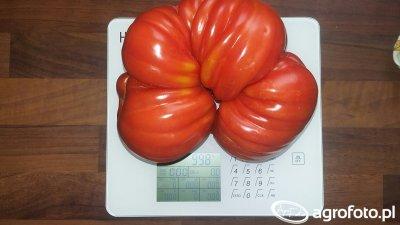 Pomidor gruntowy.