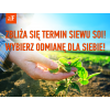 soja agrofakt1