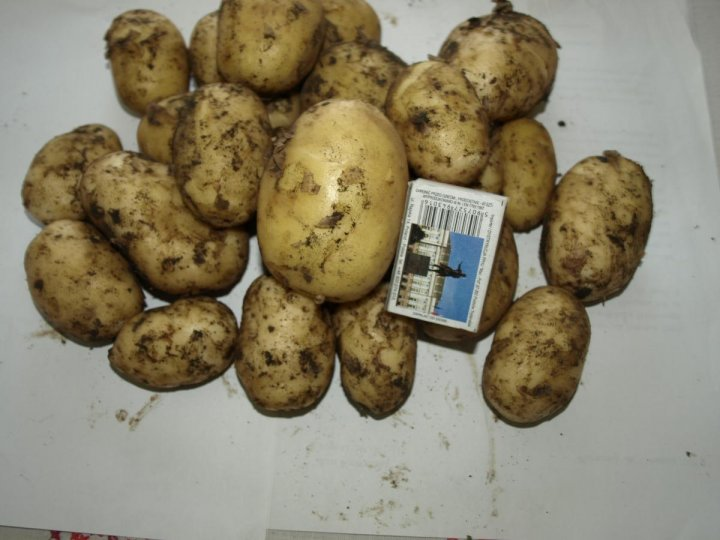 młode ziemniaki.jpg