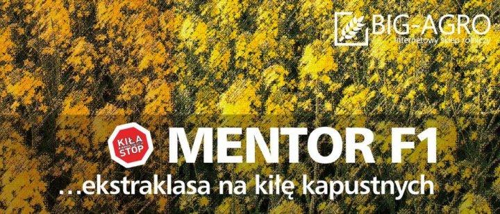 Mentor.jpg