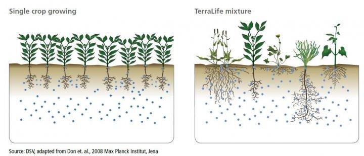 terralife-biological-diversity.JPG