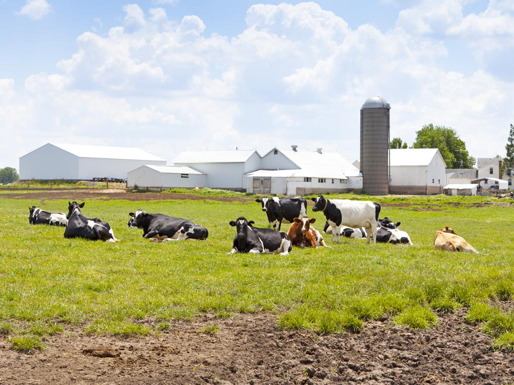 Modernizacja gospodarstw rolnych producentów trzody chlewnej i bydła mlecznego
