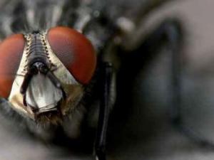 Jak skutecznie walczyć z muchami?